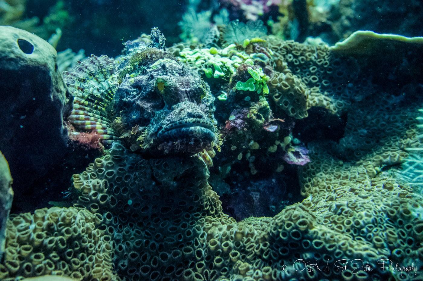 Batu Balong; diving Komodo National Park, Indonesia