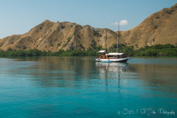 Diving in Komodo National Park, Indonesia: Pros & Cons of a Day Trip vs. Liveaboard Experience