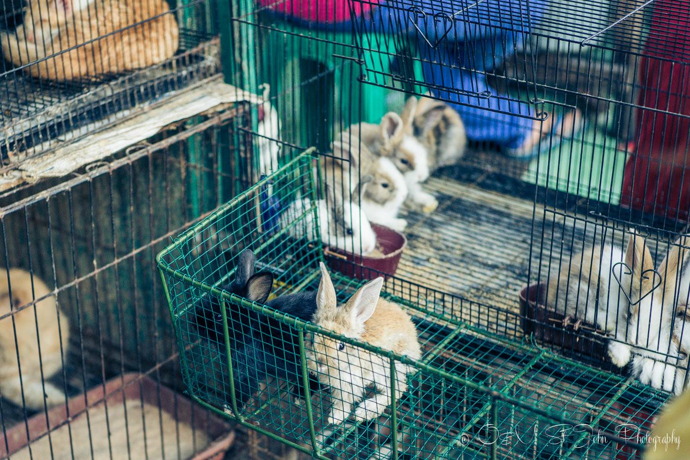 Bunnies at the Malang Bird Market, East Java, Indonesia