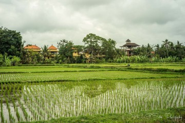 Sustainable Traveler's Guide to Top Things to do in Ubud, Bali