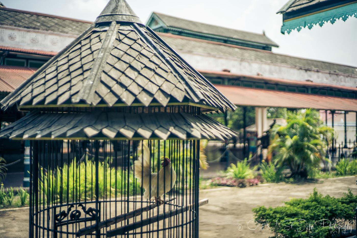 Yogyakarta tour: Kraton grounds