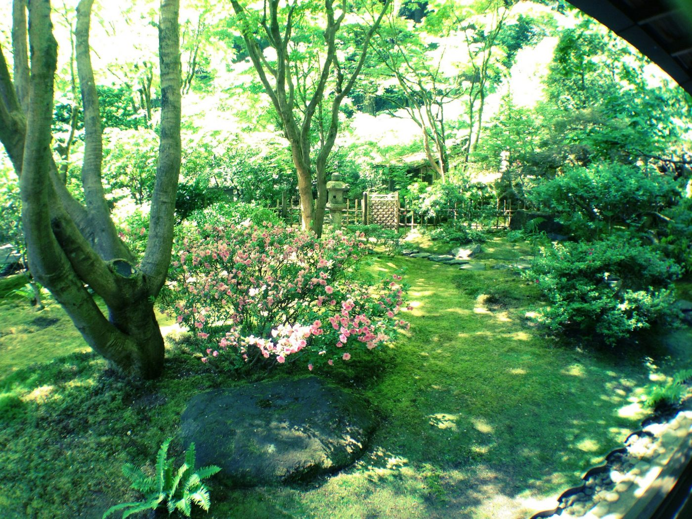 Things to do in Portland Oregon: Inner Garden at Tea House