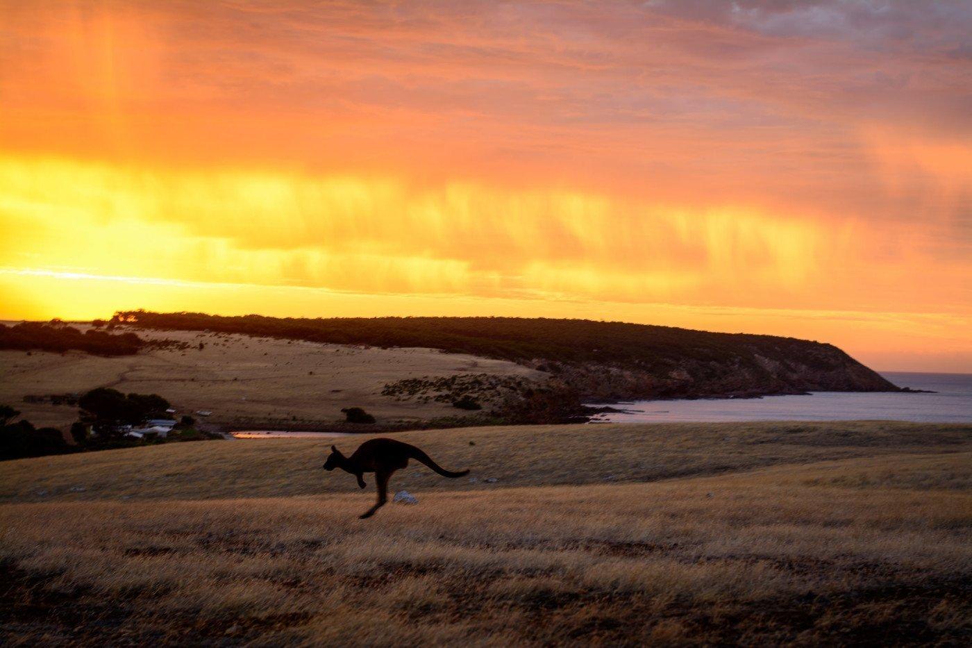 Kangaroo Island, South Australia. Photo by Matthew Fuentes via Flickr CC