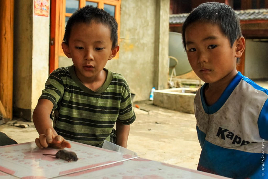 Meeting 2 local boys and their pet rat inside a guest house along the hike through the Tiger Leaping Gorge