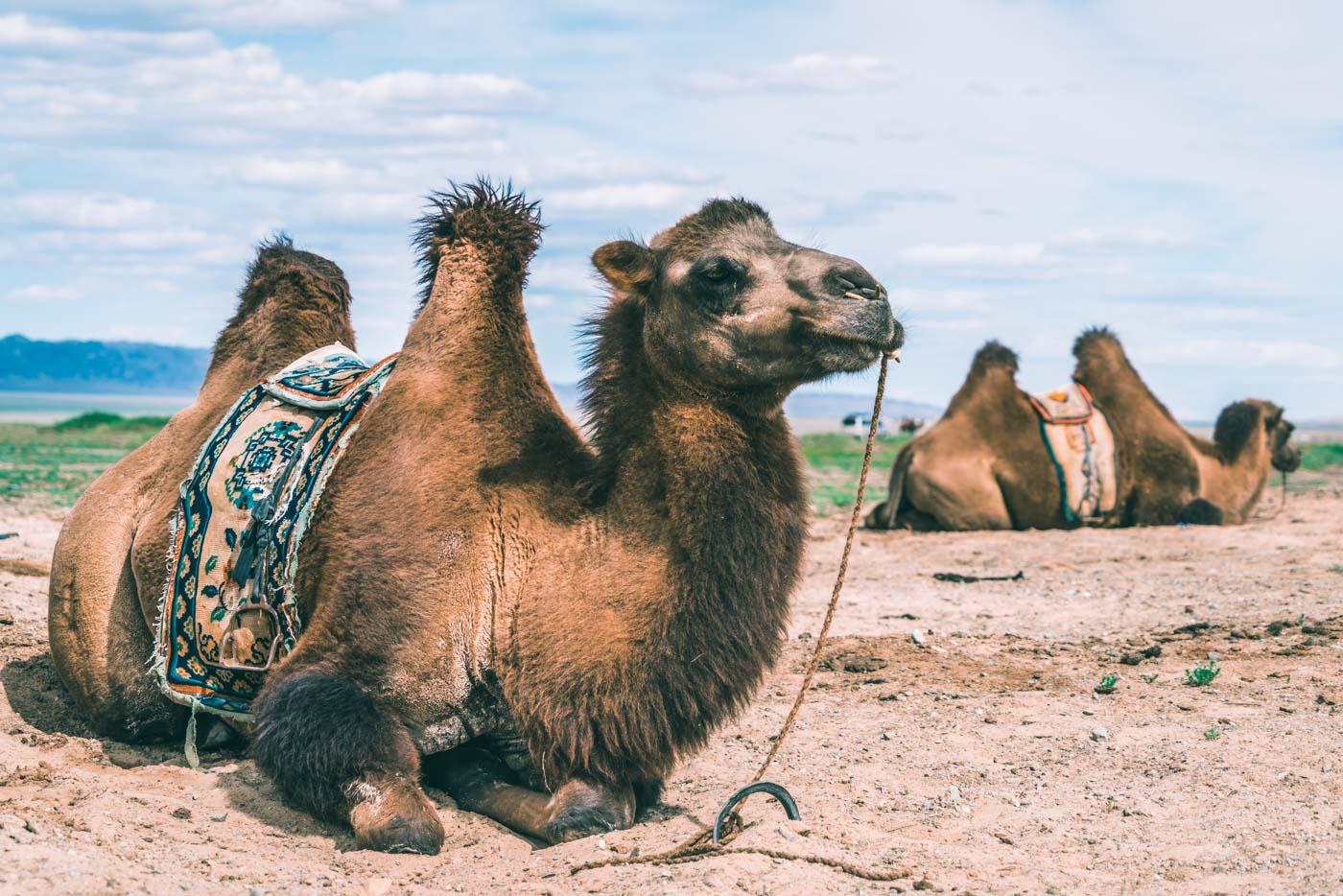 3 weeks in Mongolia