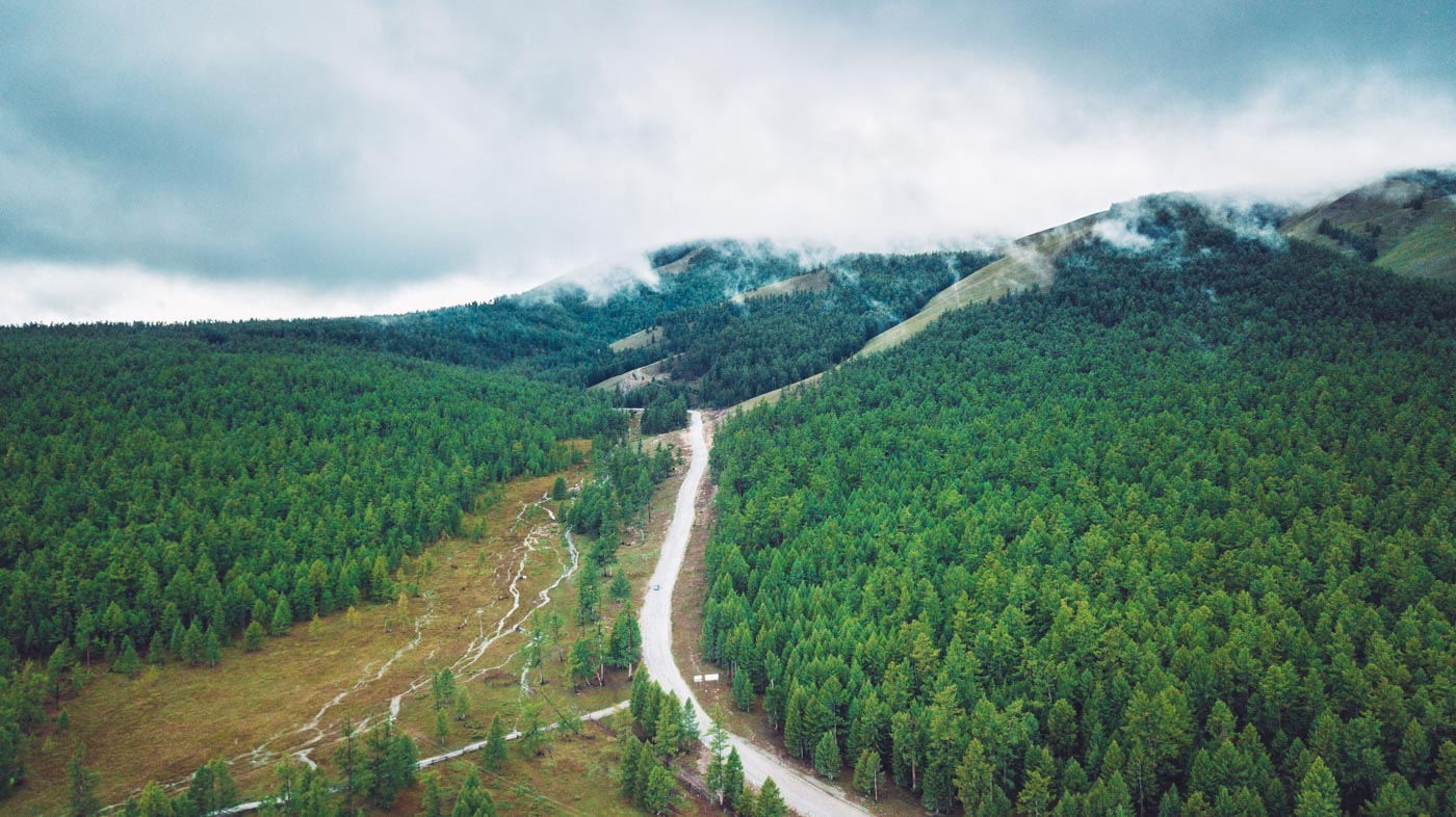 The never-ending pine forest in Northern Mongolia