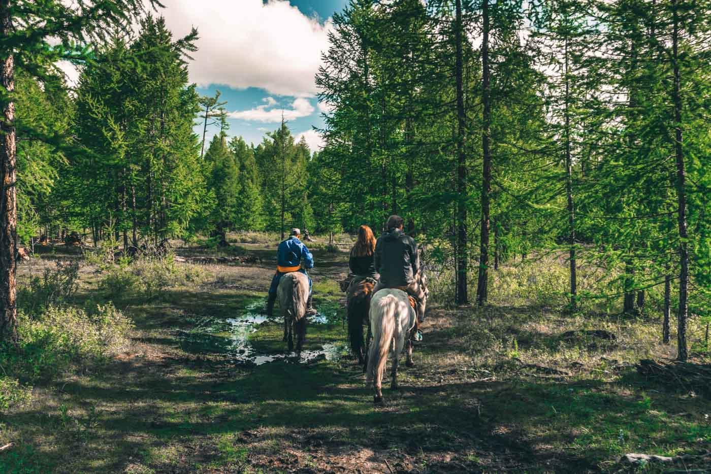 Horseback riding in pine forest