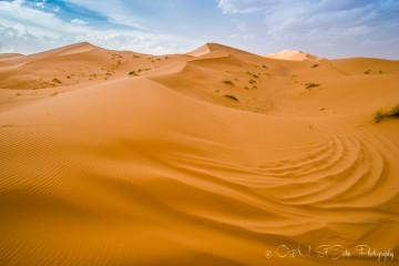 Sahara Desert Tour Gone Wrong