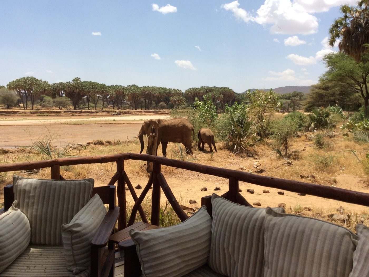 Luxury Camps in Kenya: mother and her calf
