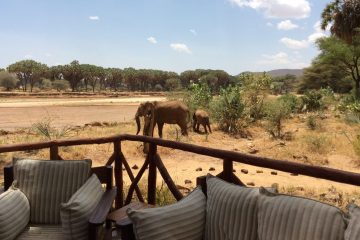 Top Luxury Safari Lodges in Kenya that Are Worth A Visit
