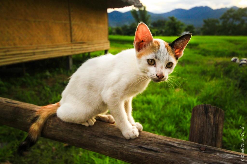 I was smitten by this kitten