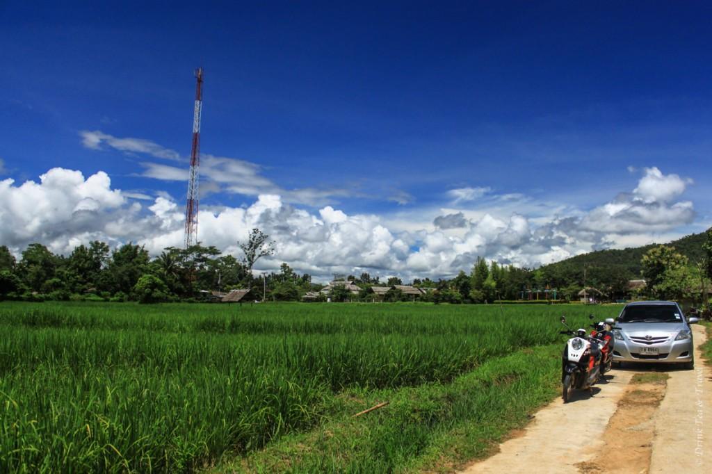 Morning views. Blue skies and green rice paddies = heaven!