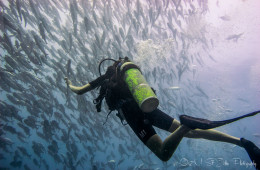 Oksana swimming with jack fish in Sipadan Island. Diving. Sabah. Malaysia. Borneo