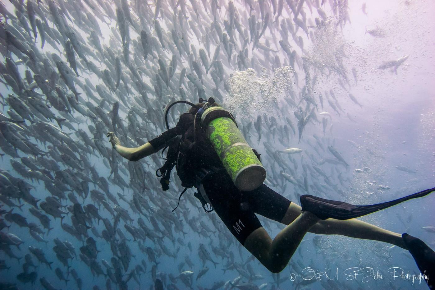 Oksana swimming with jack fish in Sipadan Island. Diving. Sabah. Malaysia. Borneo