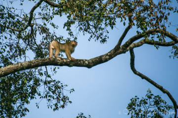 Photo Essay: In Search of Wildlife on Kinabatangan River Cruise