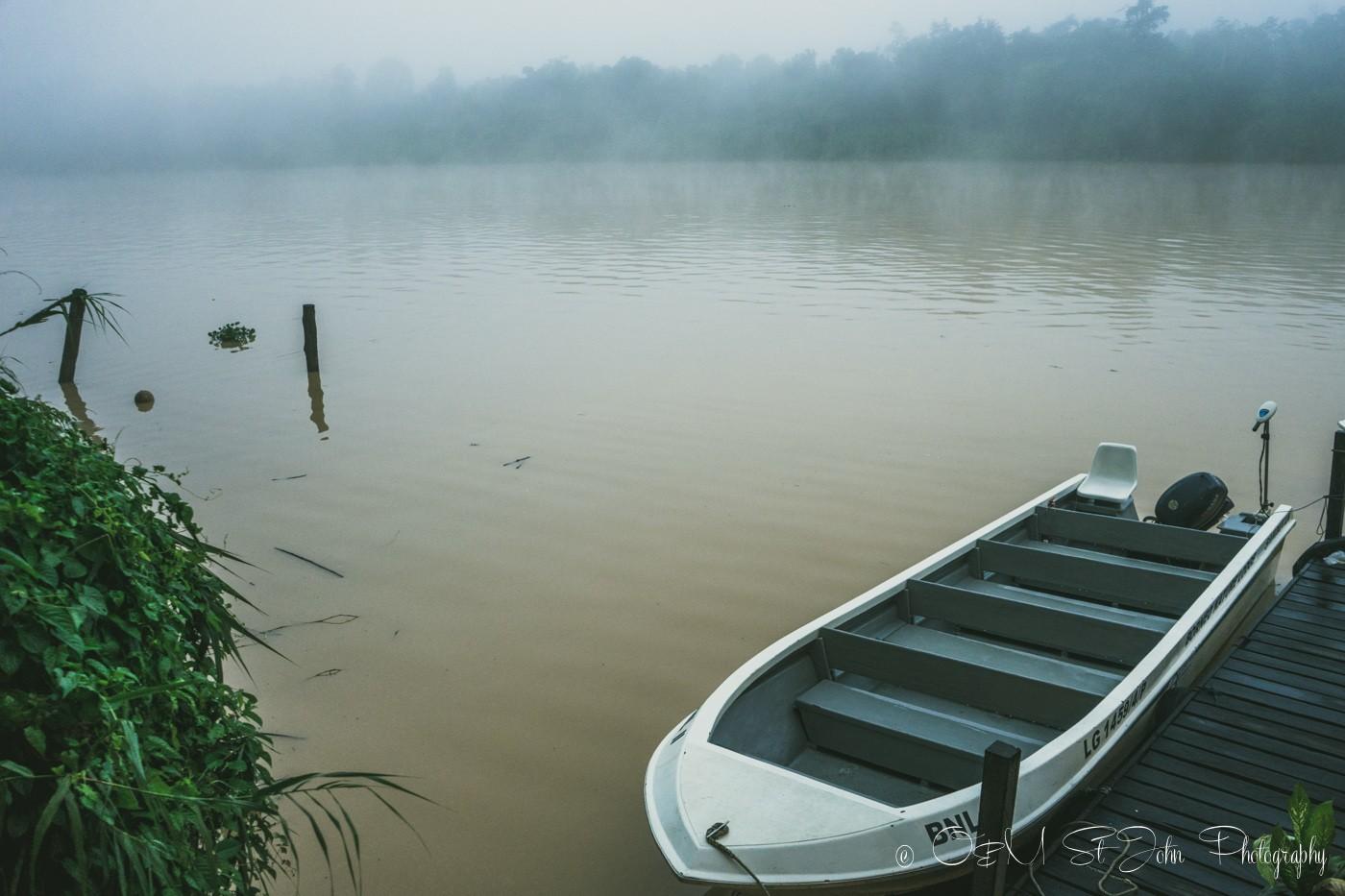 Misty morning on Kinabatangan River. Sabah. Malaysia