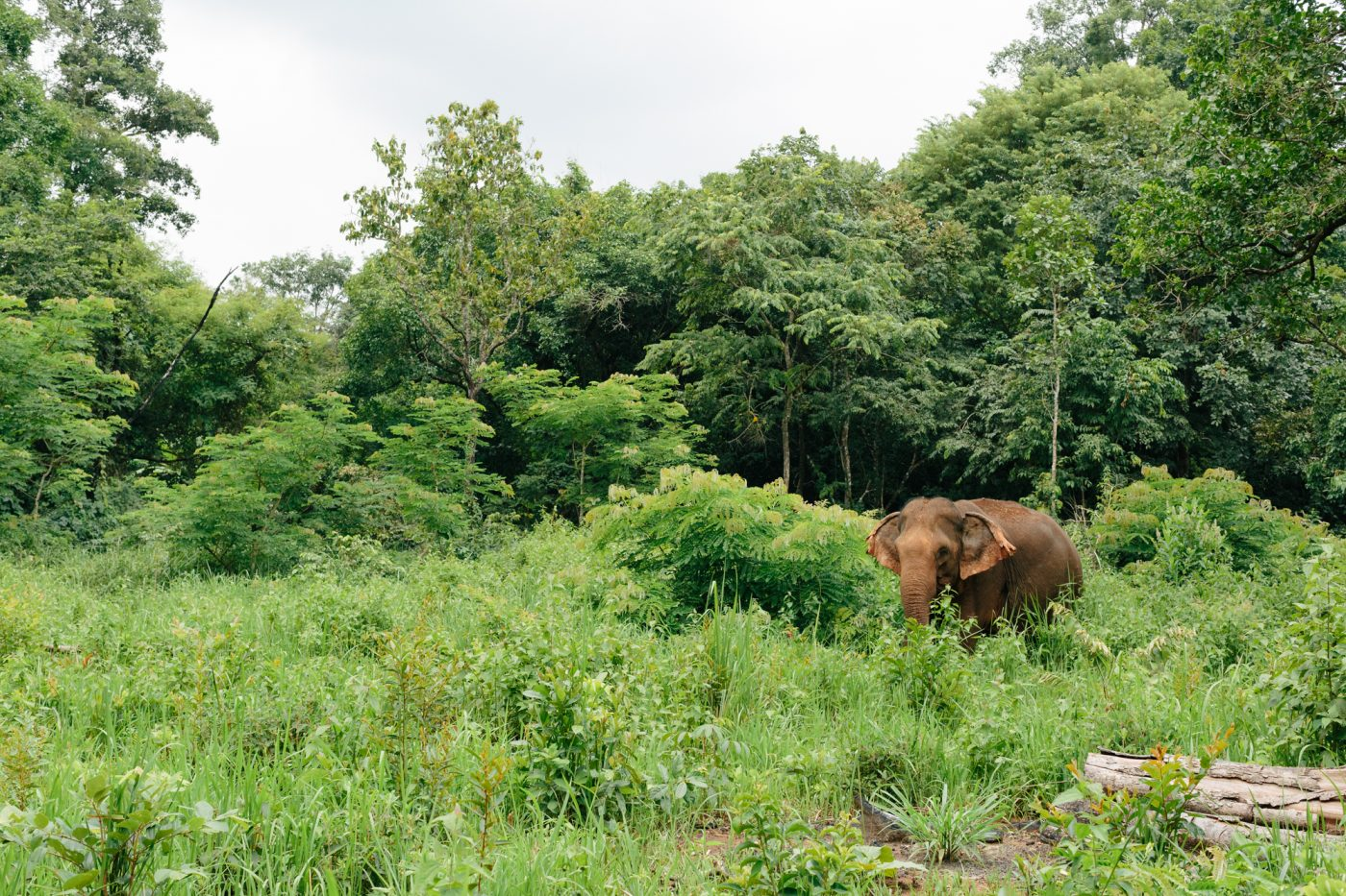 ethical wildlife tourism: Mondulkiri EVP Elephant