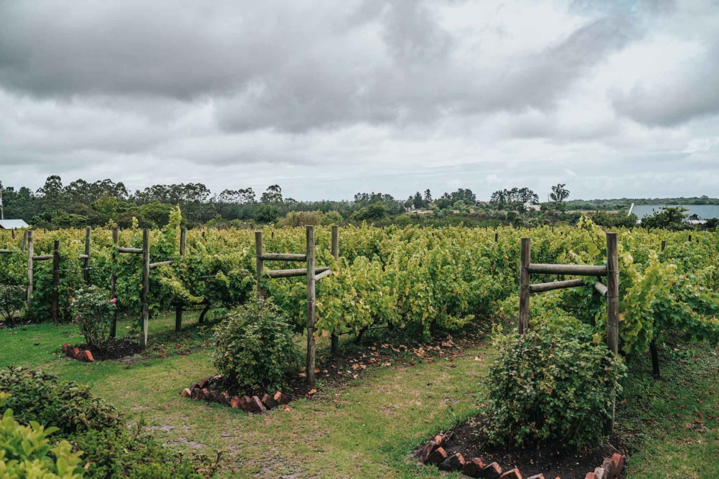 Bramon Winery, Plettenberg Bay