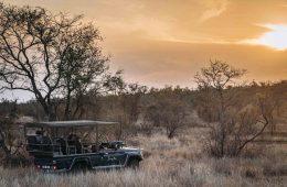 Safari in Kruger National Park Singita Private Concession