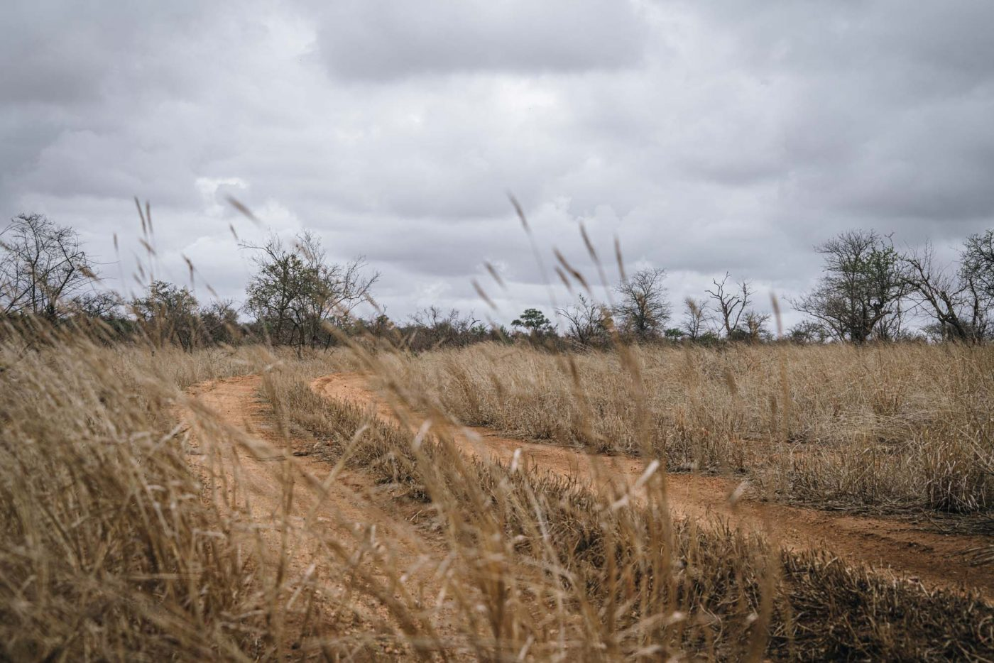 Unspoiled wilderness of Timbavati Nature Reserve