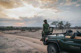 On a safari in Timbavati Nature Reserve