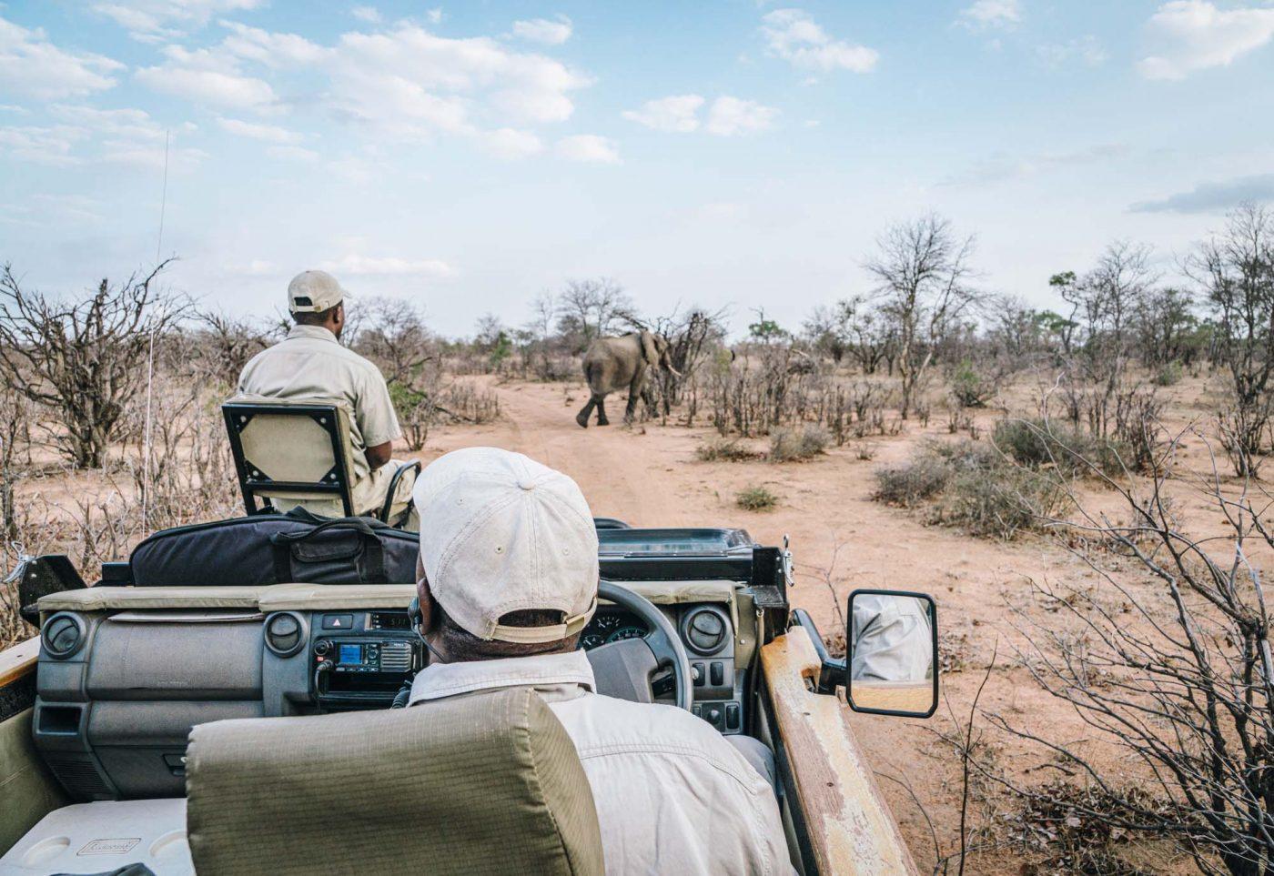 Morning game drive at Umlani Bushcamp in Timbavati Nature Reserve