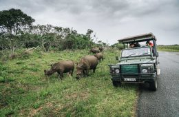 Rhino encounter in iSimangaliso National Park