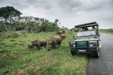 1 Week South Africa Itinerary: The Best of Wildlife and Nature from Johannesburg to Durban