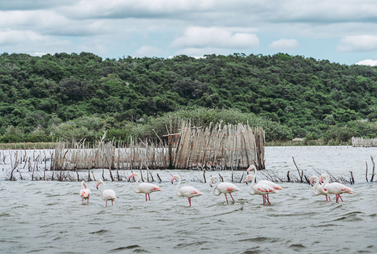 Kosi Bay, iSimangaliso Wetland Park, South Africa