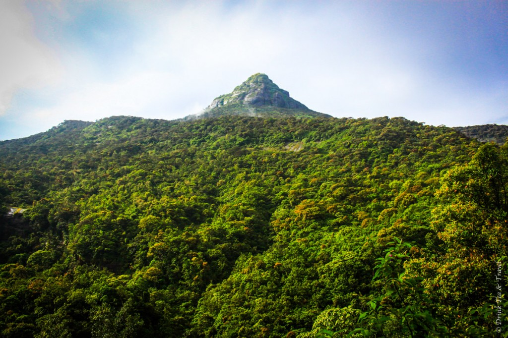 Sri Pada (Adam's Peak) from afar. The path to the top consists of over 5,000 steps, yet hundreds of thousands of locals and travelers climb to the top of this peak on a yearly basis