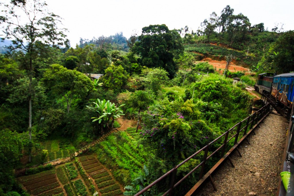 A train ride through the Hill Country region is probably the most picturesque activity you can do Sri Lanka. The best part of the journey is from Haputale to Ella