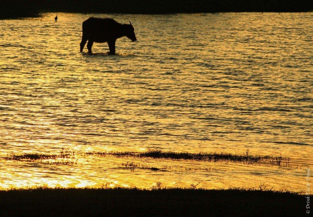 Sunrise at Yala National Park, Sri Lanka