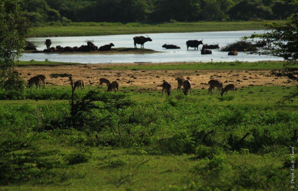 Life in Yala National Park, Sri Lanka