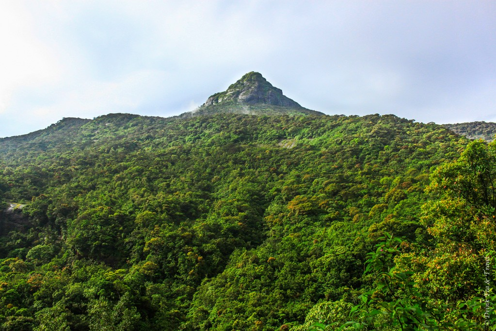 Climb to Adam's Peak: Adam's Peak, a sacred mountain in Sri Lanka