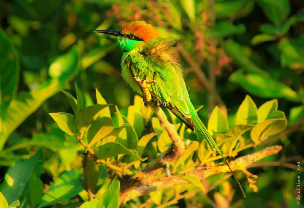 One of 215 birds in Yala National Park