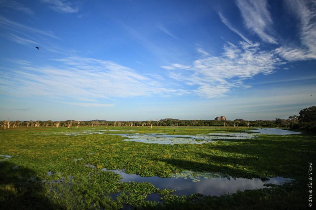 Swamp near Lunuganwehera Reservoir inside Yara National Park