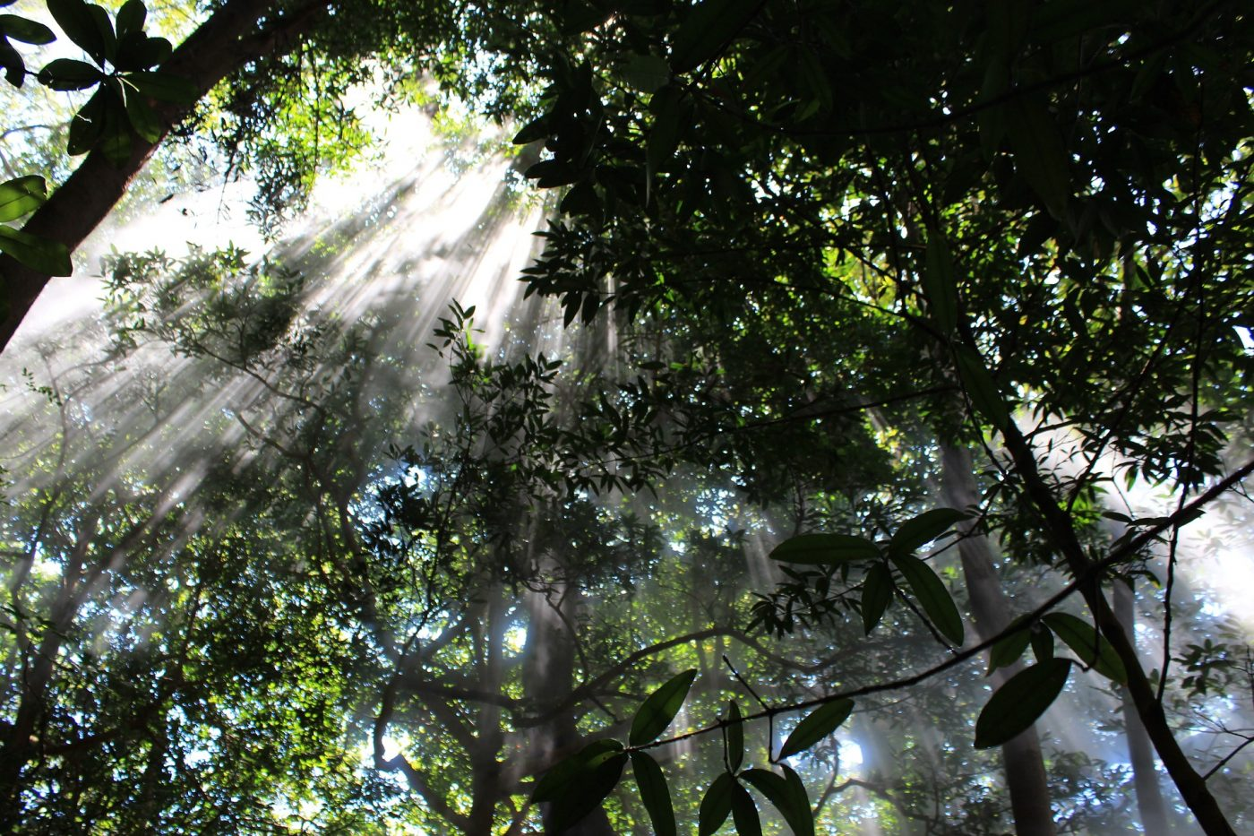 Monteverde Cloud Forest: Sun peaking through the trees in the cloud forest