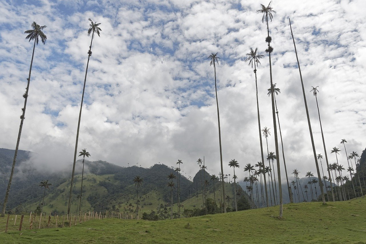 best places to visit in colombia- Cocora Valley