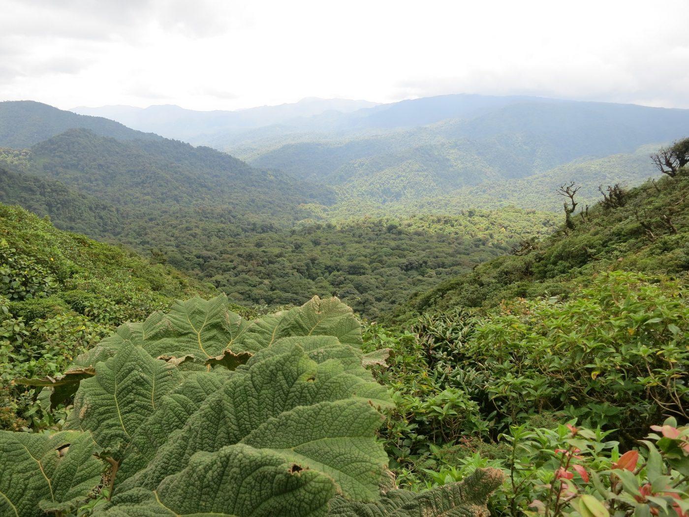 Monteverde Cloud Forest: A sea of green in Monteverde