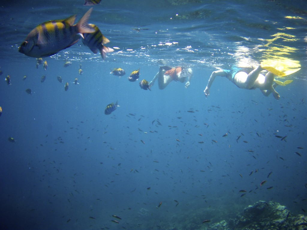 Guide to Scuba Diving in Costa Rica, Snorkeling, Caño Island