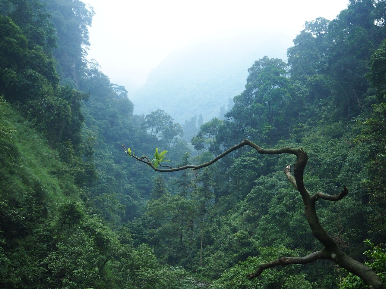 Beautiful places in China: Emeishan