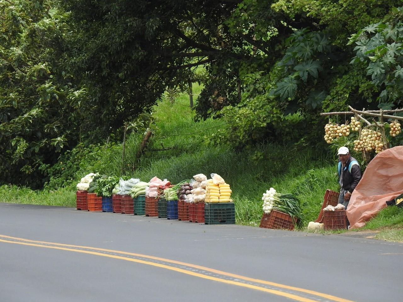 Puerto Jimenez: Roadside Costa Rican produce