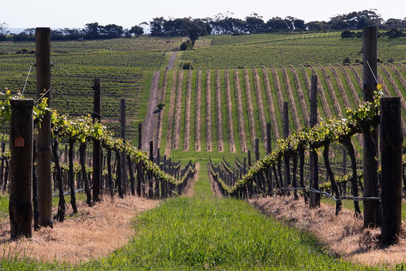 wine regions in Australia