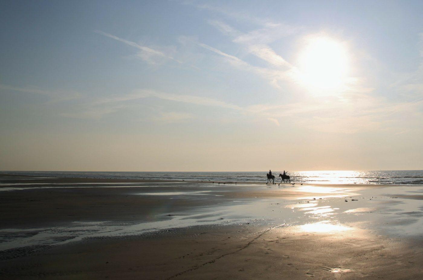Activities Byron bay: Horseback riding on beach