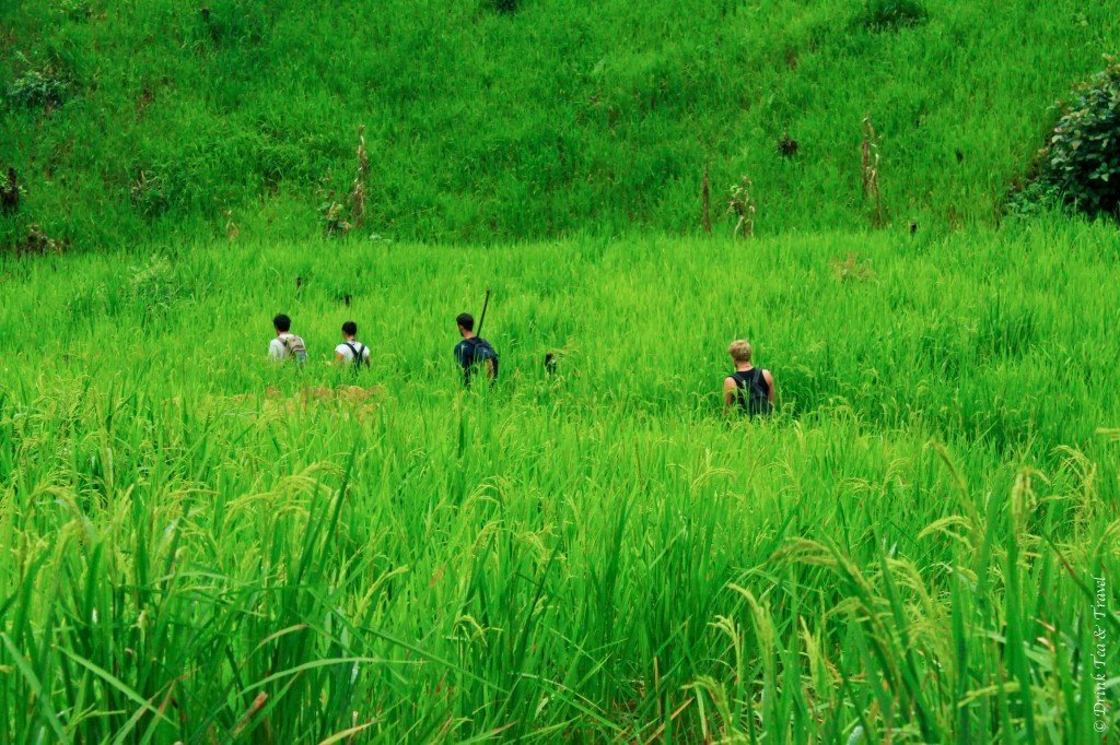 Trekking throuhg the country side outside of Chiang Mai, Thailand
