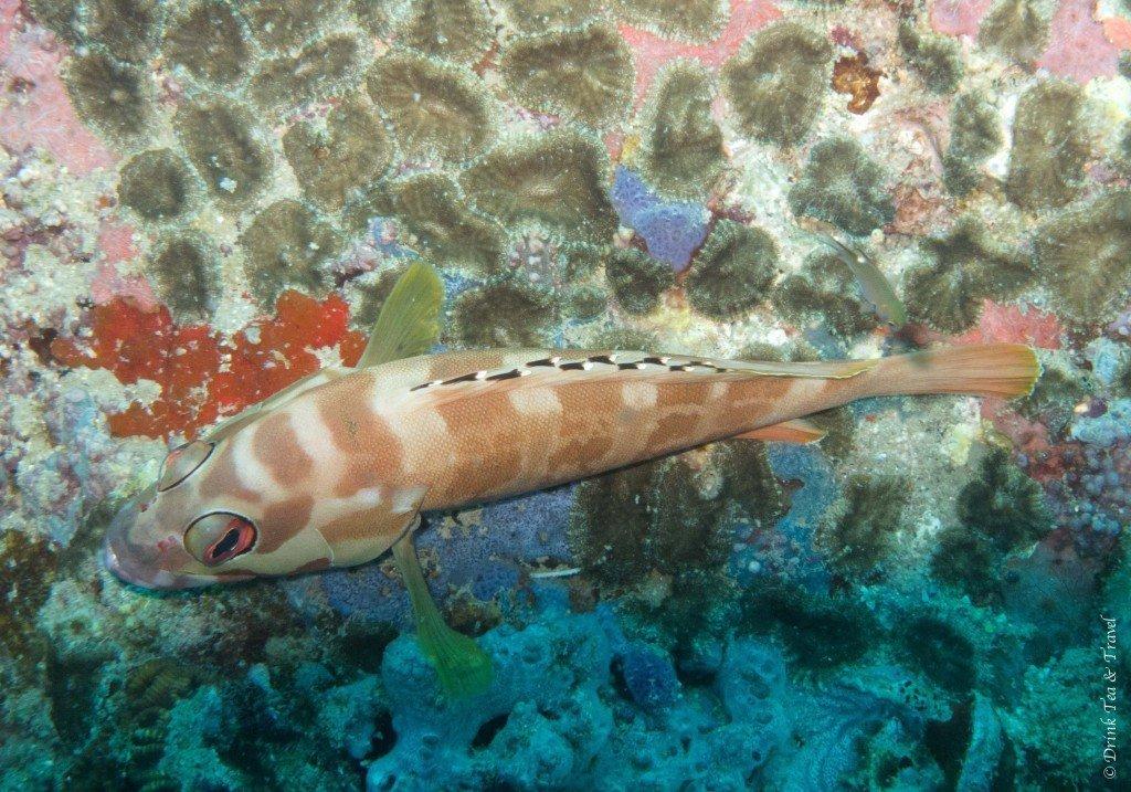 Life underwater, Koh Tao, Thailand - Koh Tao Diving